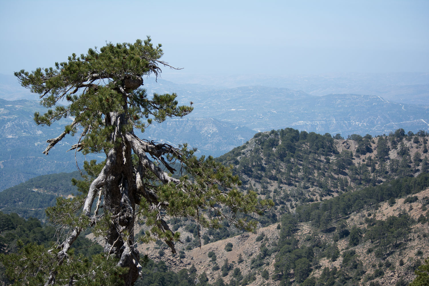 View from Troodos hike.