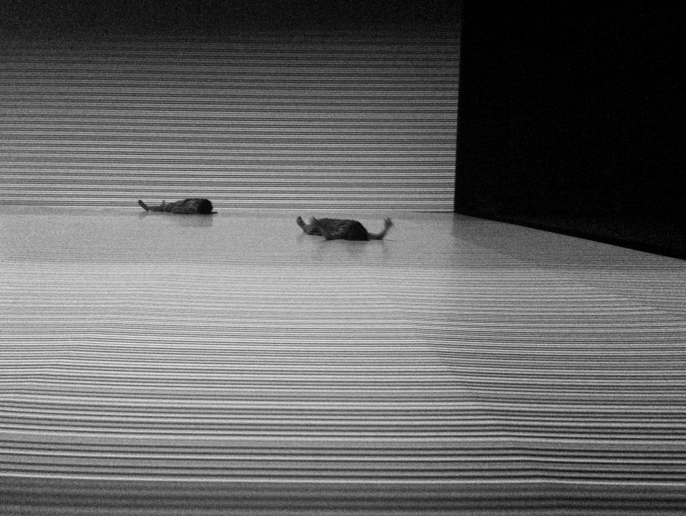 14.aza-armory dance26.jpg