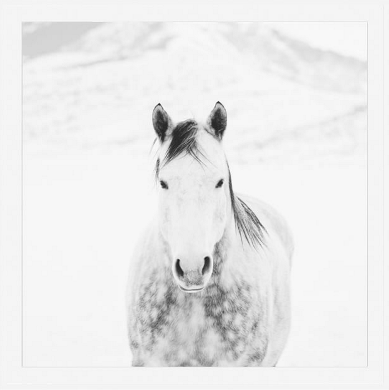 This gorgeous black and white print titled  Winter White Horse by Jennifer Myers lends a pair of soft, guardian eyes over any space.