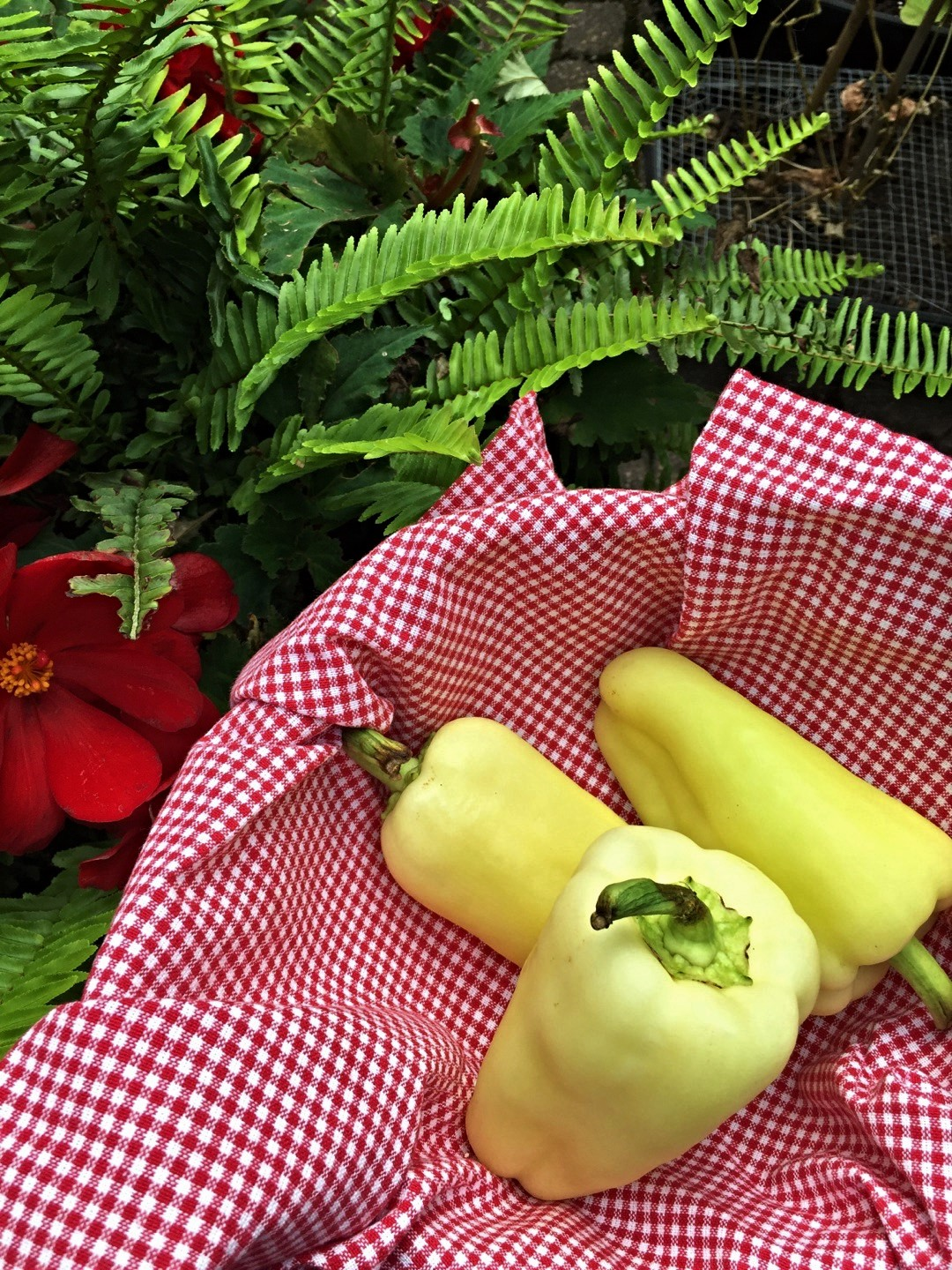 kitchenblissca-hungarian-peppers.jpg