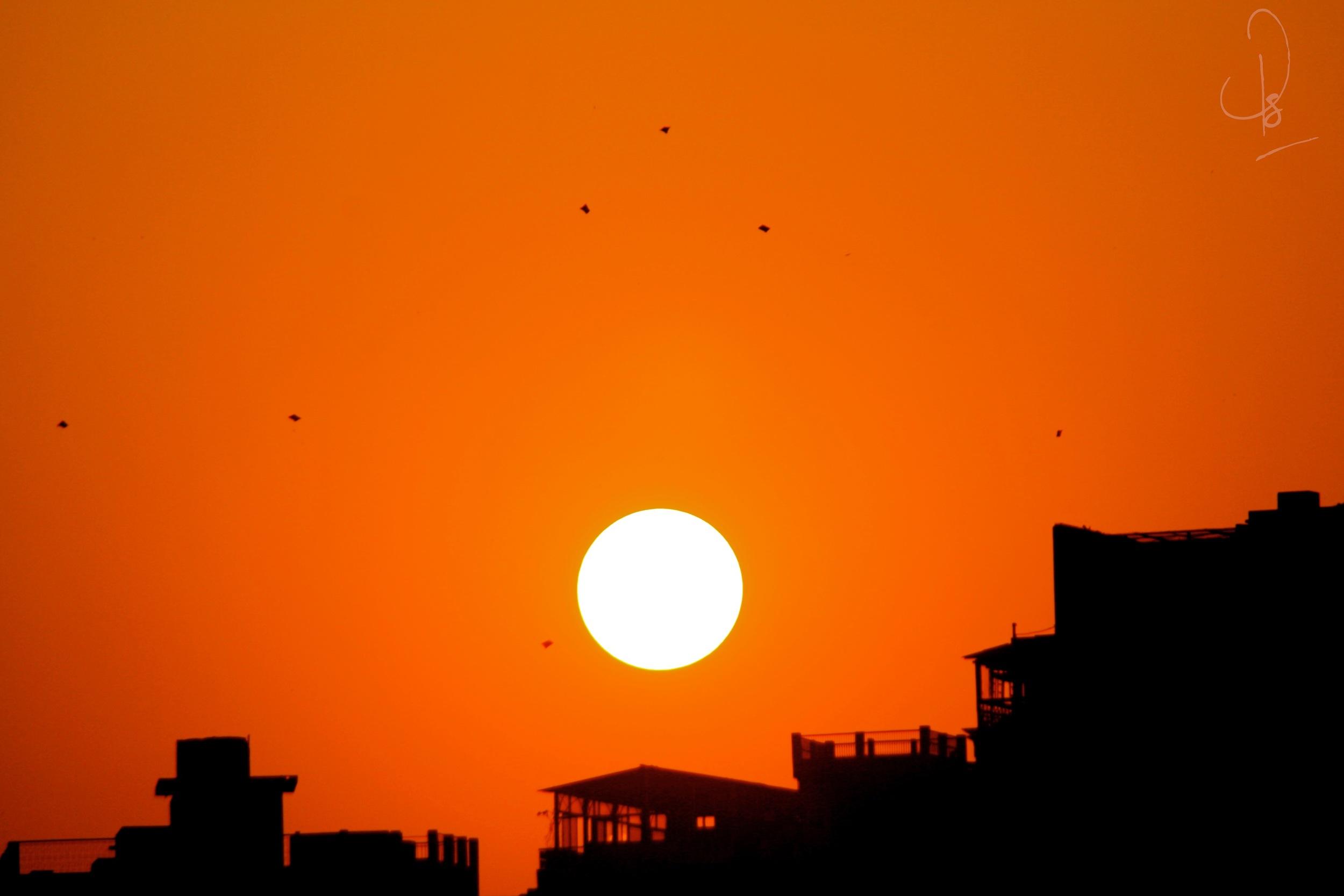 Kites at Sunset