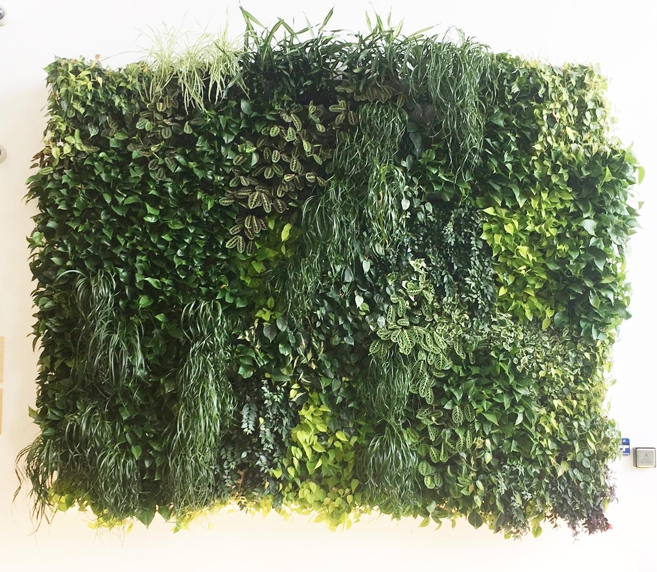 Here's my vertical garden inspiration.