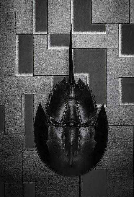 Horsehoe Crab_014.jpg