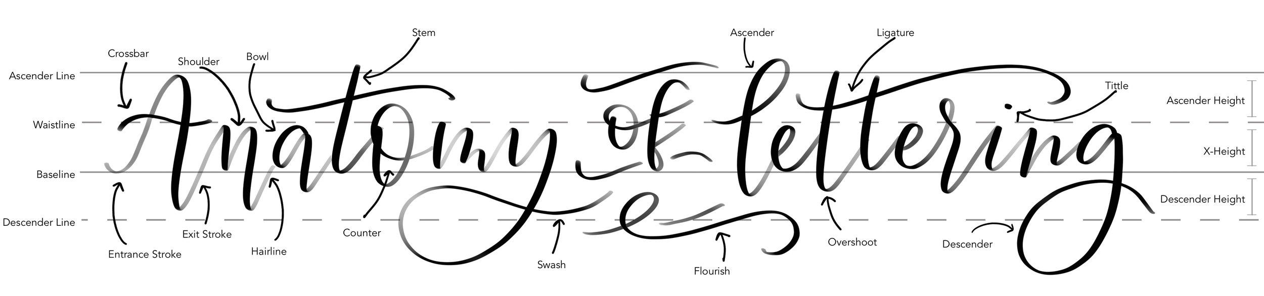 anatomy_of_lettering.jpg