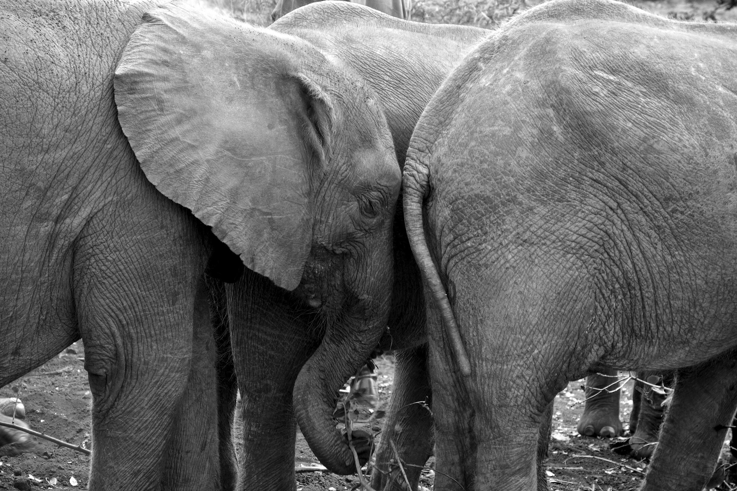 baby elephants.jpg