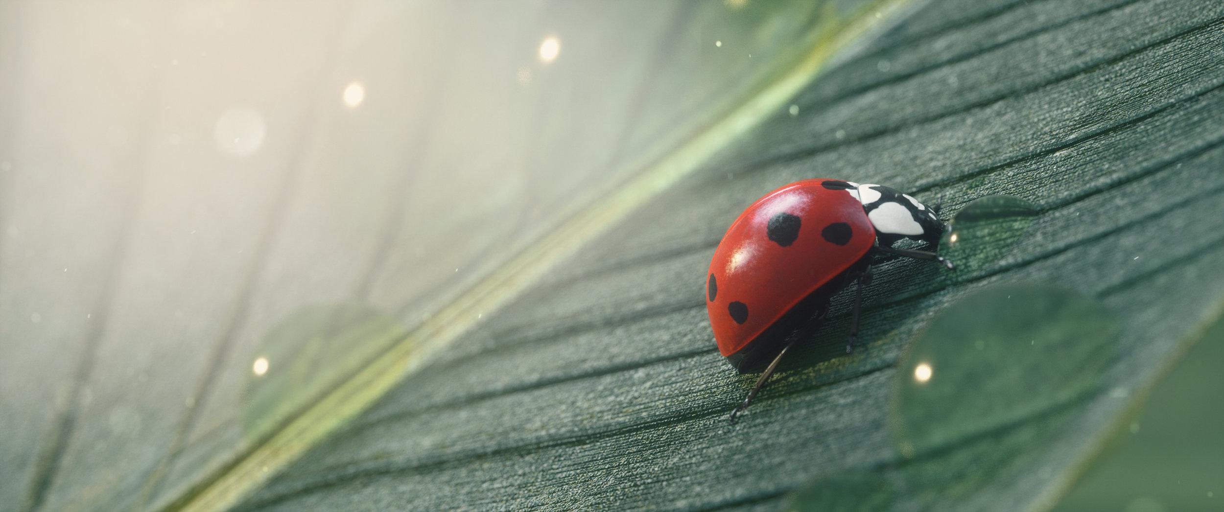 ladybug.003.jpg