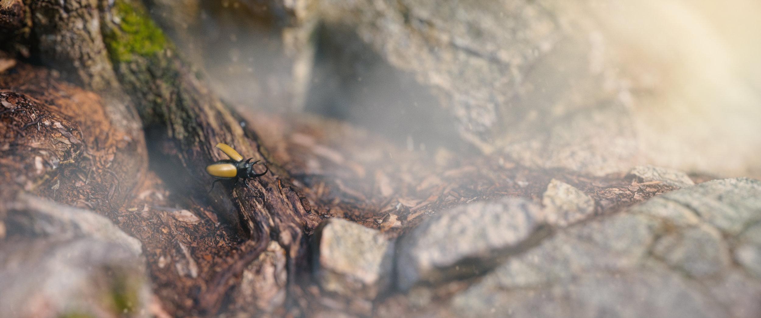 beetle.001.jpg
