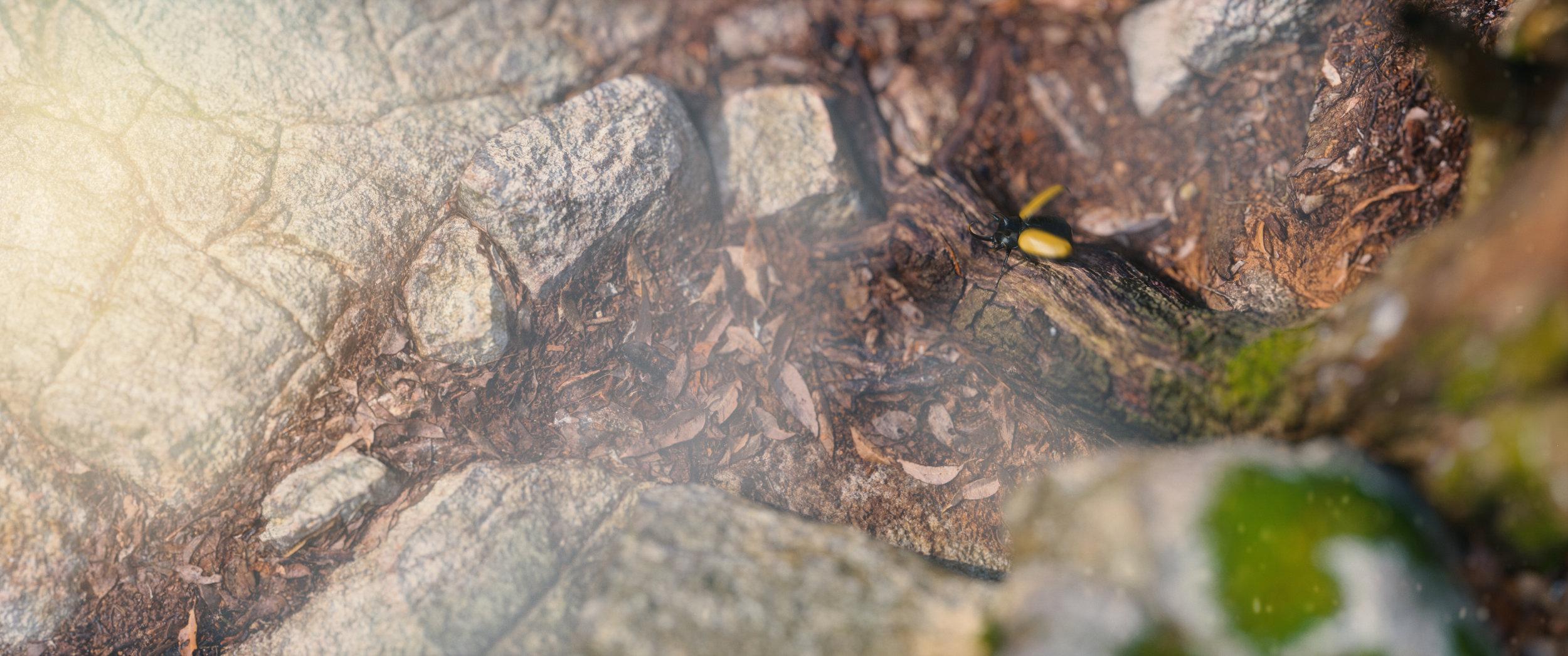 beetle.002.jpg