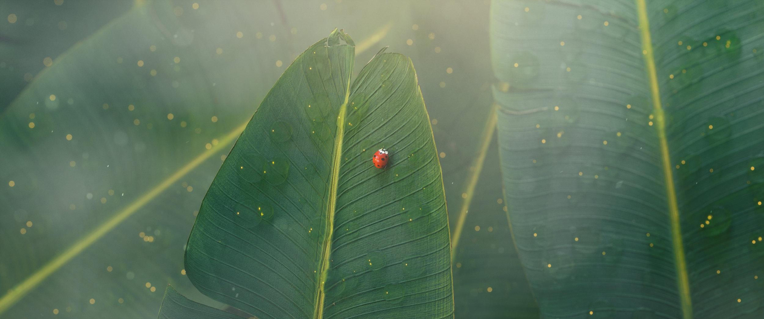 ladybug.002.jpg