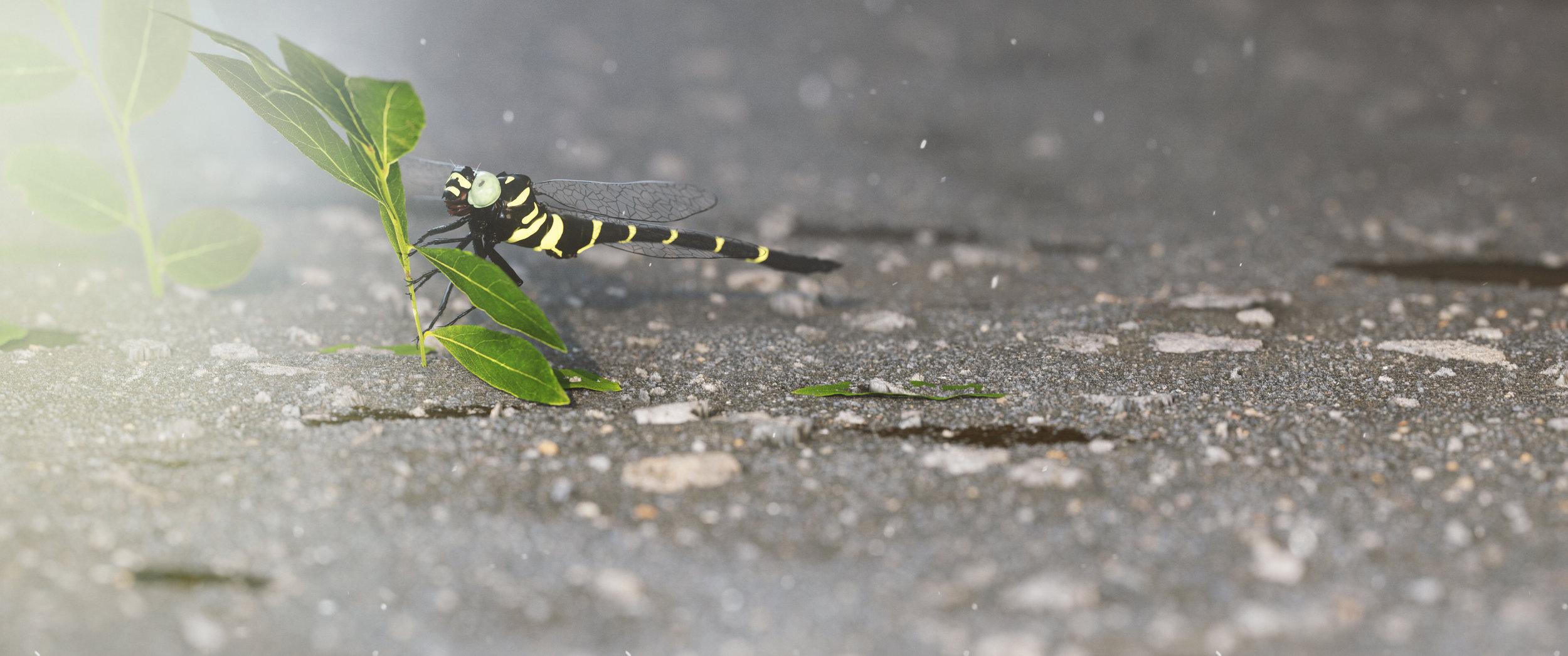 dragonfly.002.jpg