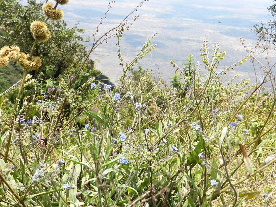 ngong-hills-hike-flowers2.jpg