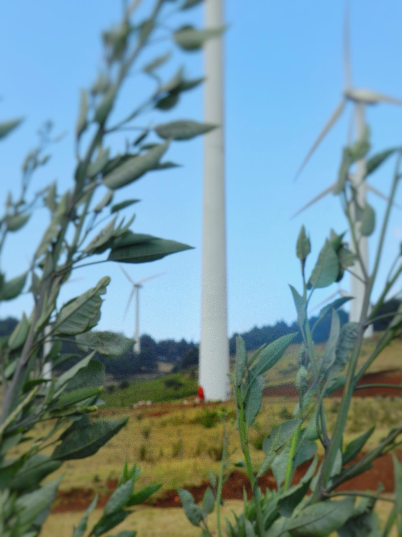 ngong-hills-wind-farm