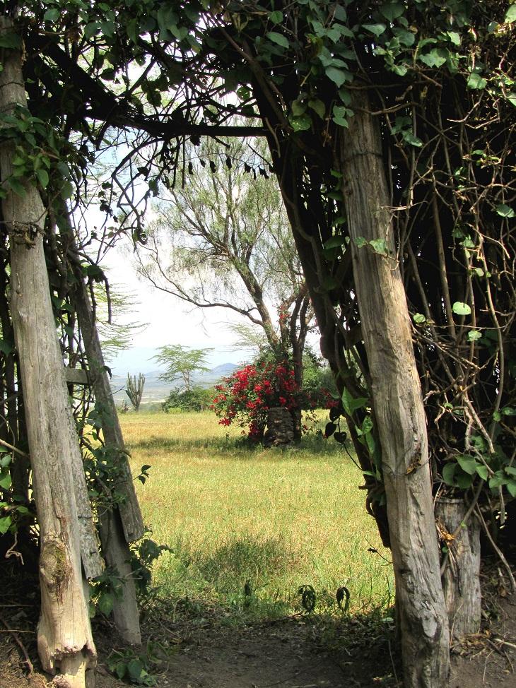 jacaranda elementaita lodge, kenya