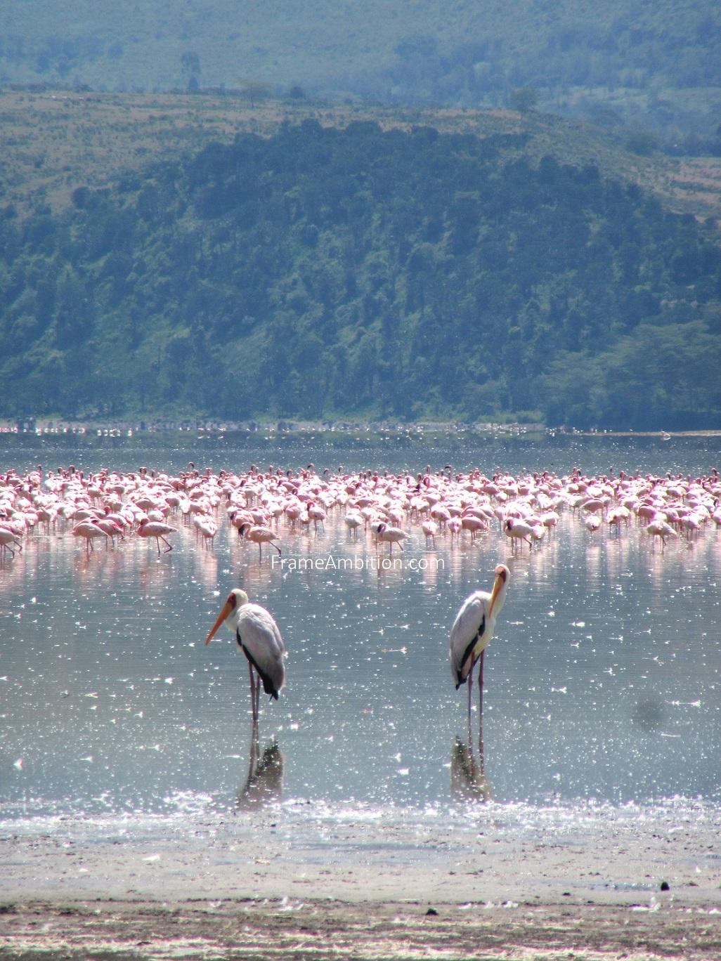 lake_elementaita_birds.jpg