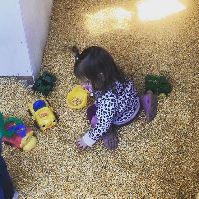 Finally feeling like fall 🍁🍂🍁 Playing in corn was a great way to spend the weekend! @gaverfarm