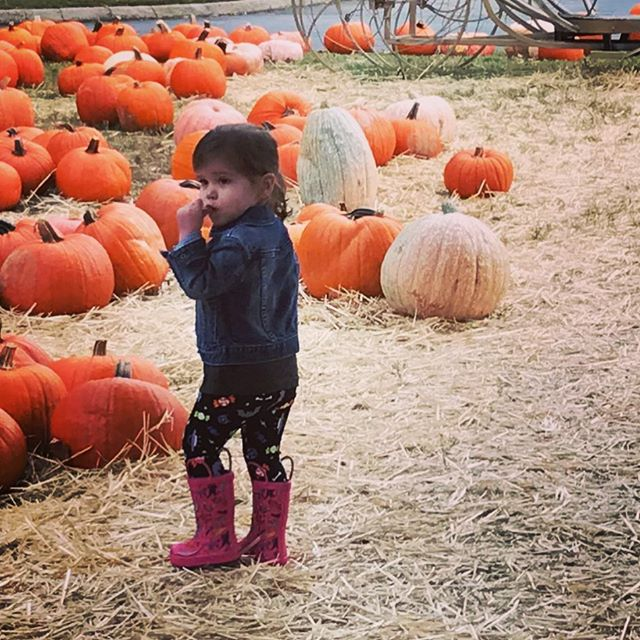 "Picking a pumpkin is serious stuff! Had a blast with my mini this past weekend grabbing some pumpkins and ""baby pumpkins"" for our front porch!"
