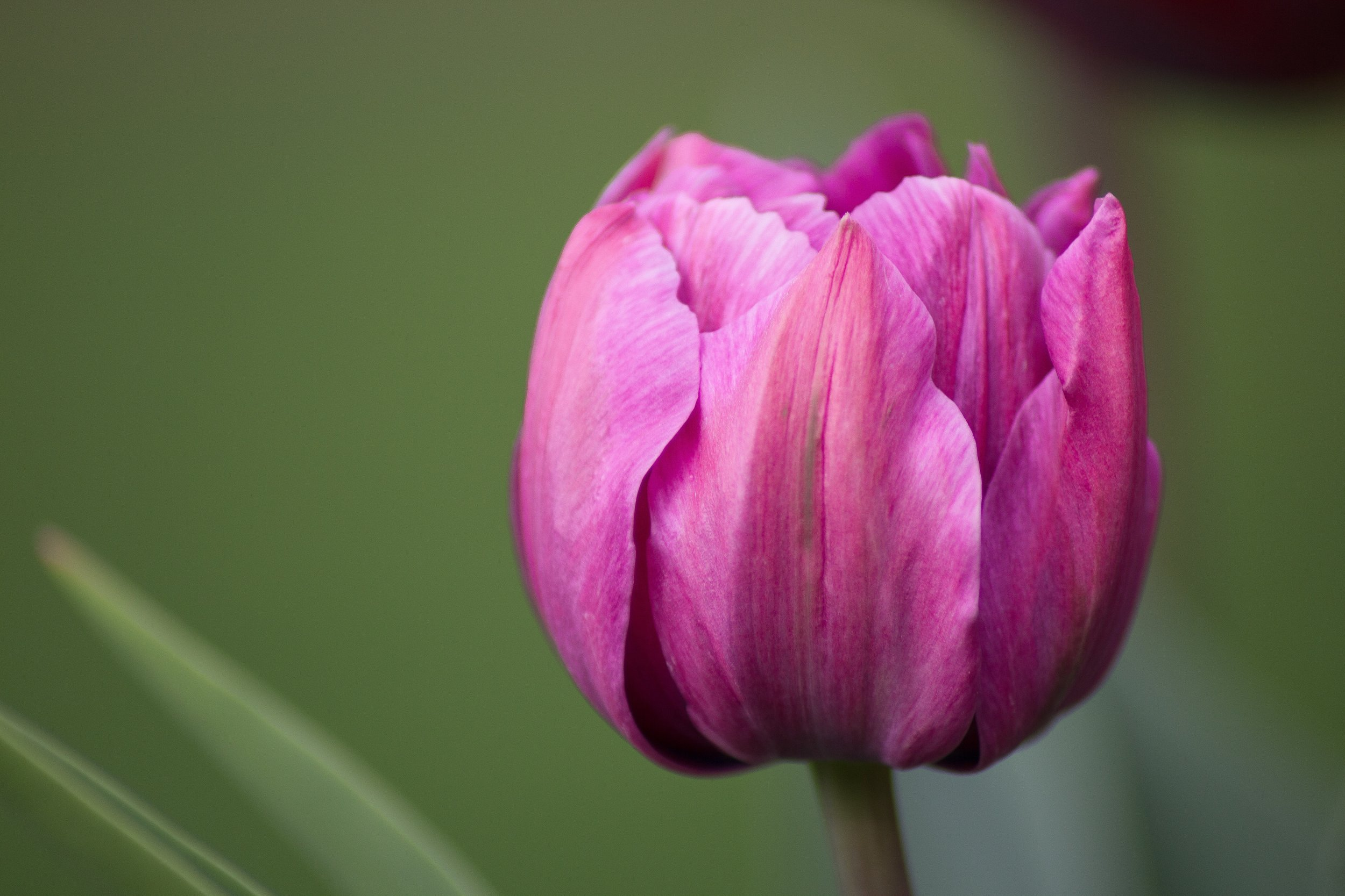 Retraite de printemps -