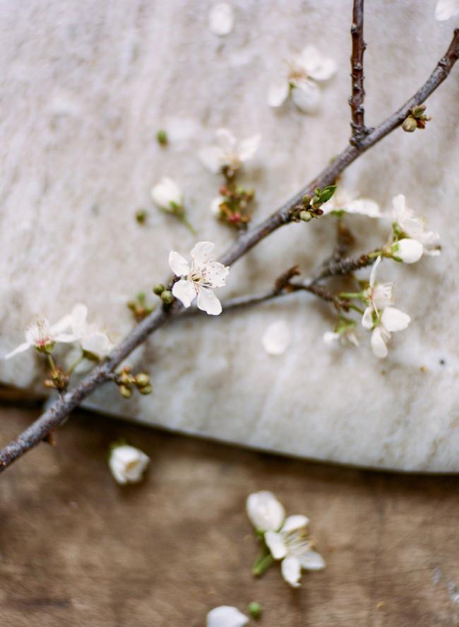 02-bloom.jpg