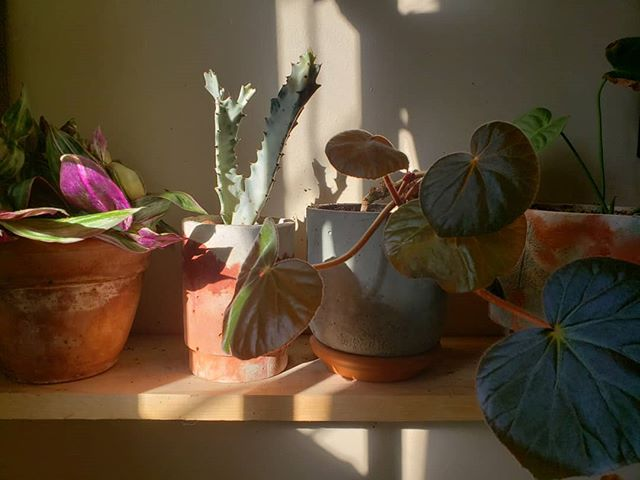 A very pleasing shimmering shelf morning moment 💫 . . . . #plants #plantsofinstagram #indoorgreen #concrete #interiorwilding #pottery  #plantsmakepeoplehappy #urbanjunglebloggers #moldmaking #nature #houseplantclub #climbing #bouldering #casting #botanicalpickmeup  #propagation #ceramics #plantgoals #houseplants #greenthumb #horticulture #cactus #succulents #sculpture #stylingwithplants #makersgonnamake #indoorplants #plantstrong #plantstagram  #plantsarefriends