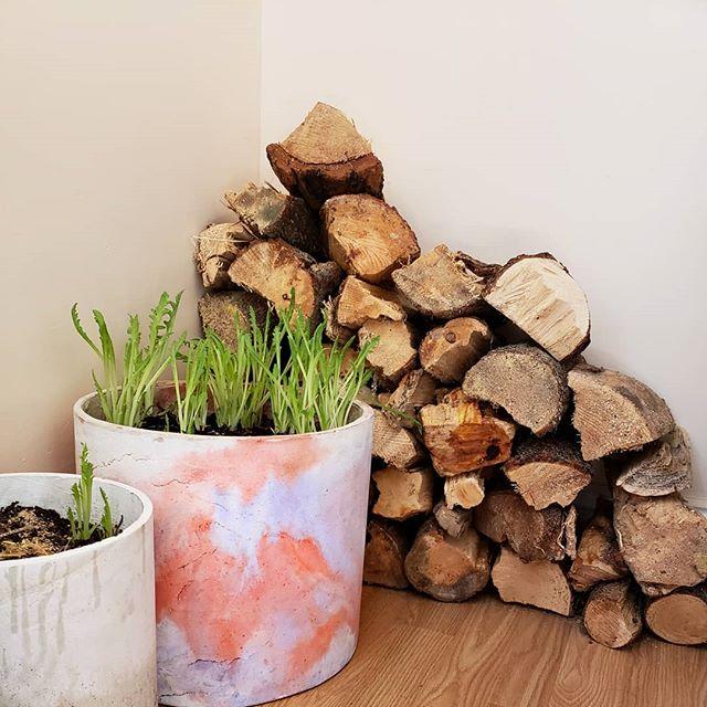 Papaver tubers pushing through 💮💮💮 . . . . #plants #plantsofinstagram #indoorgreen #concrete #plantnerd #pottery #plantsmakepeoplehappy #urbanjunglebloggers #moldmaking #nature #houseplantclub #climbing #bouldering #casting #botanicalpickmeup #propagation #ceramics #plantgoals #houseplants #poppy #horticulture #cactus #succulents #sculpture #stylingwithplants #brooklyn #indoorplants #plantstrong #minimalism #minimal