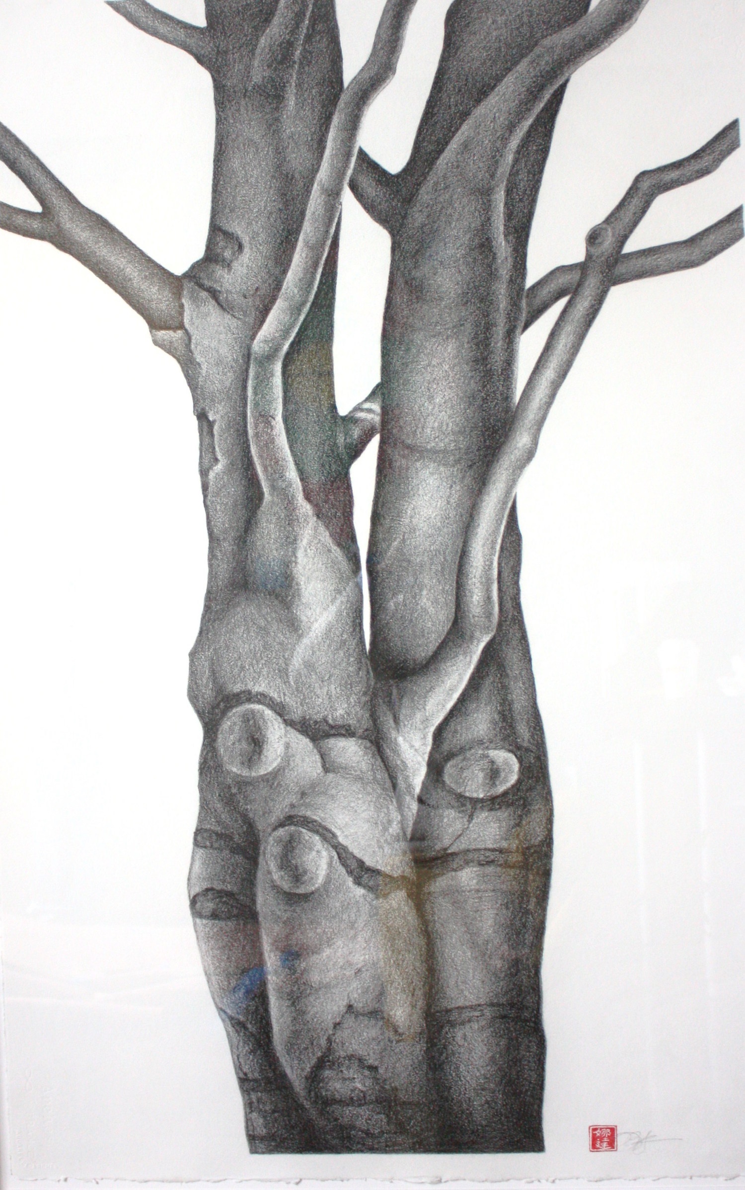 "Entwined Graphite and conte on paper  50.5"" x 35"""