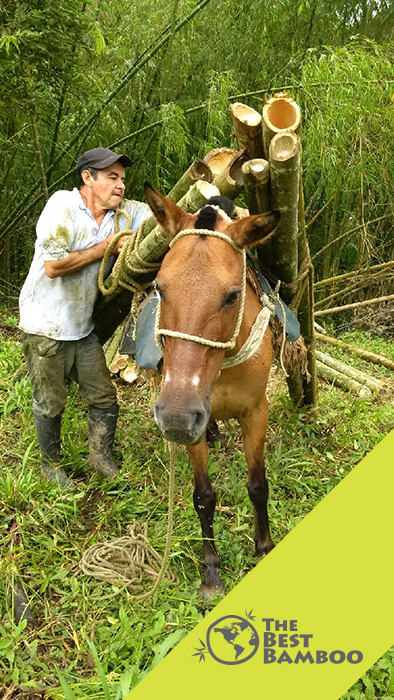 bamboo-donkey.jpg