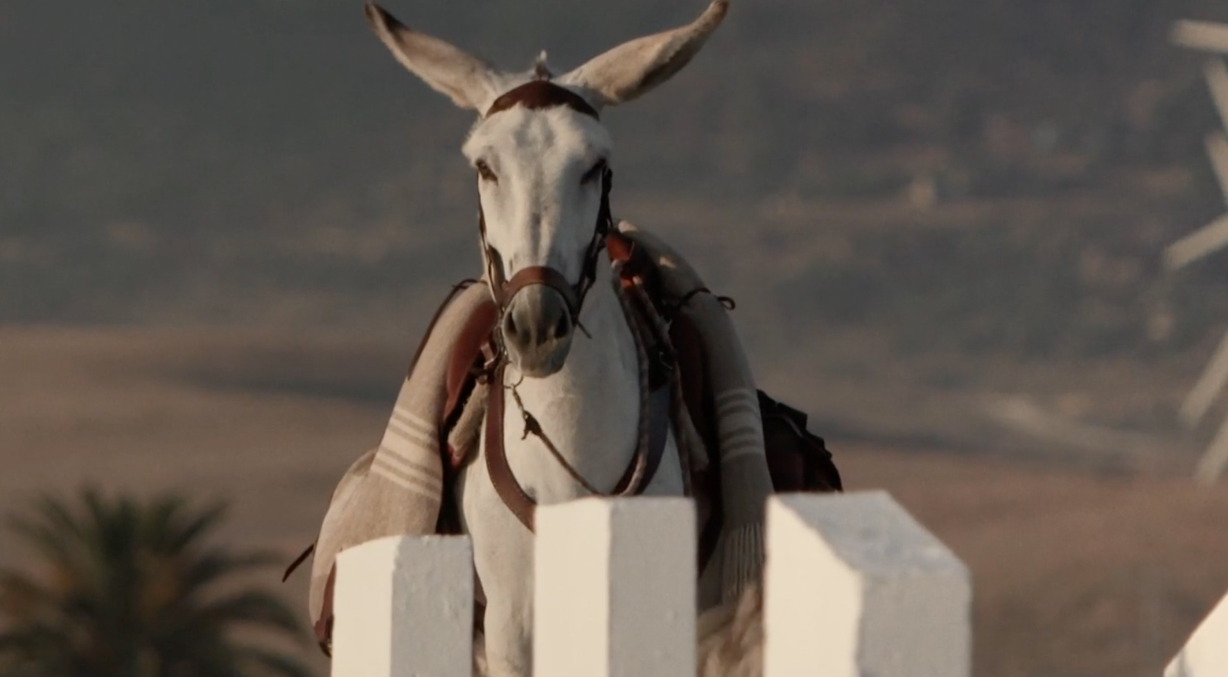 Gorrión, the star of Chico Pereria's Donkeyote (2017)