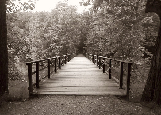"""Palace Bridge"" by Scott Takeda."