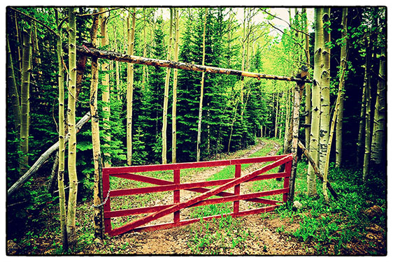 """""""Red Forest Fence"""" by Scott Takeda. Part of his """"Scene"""" collection."""