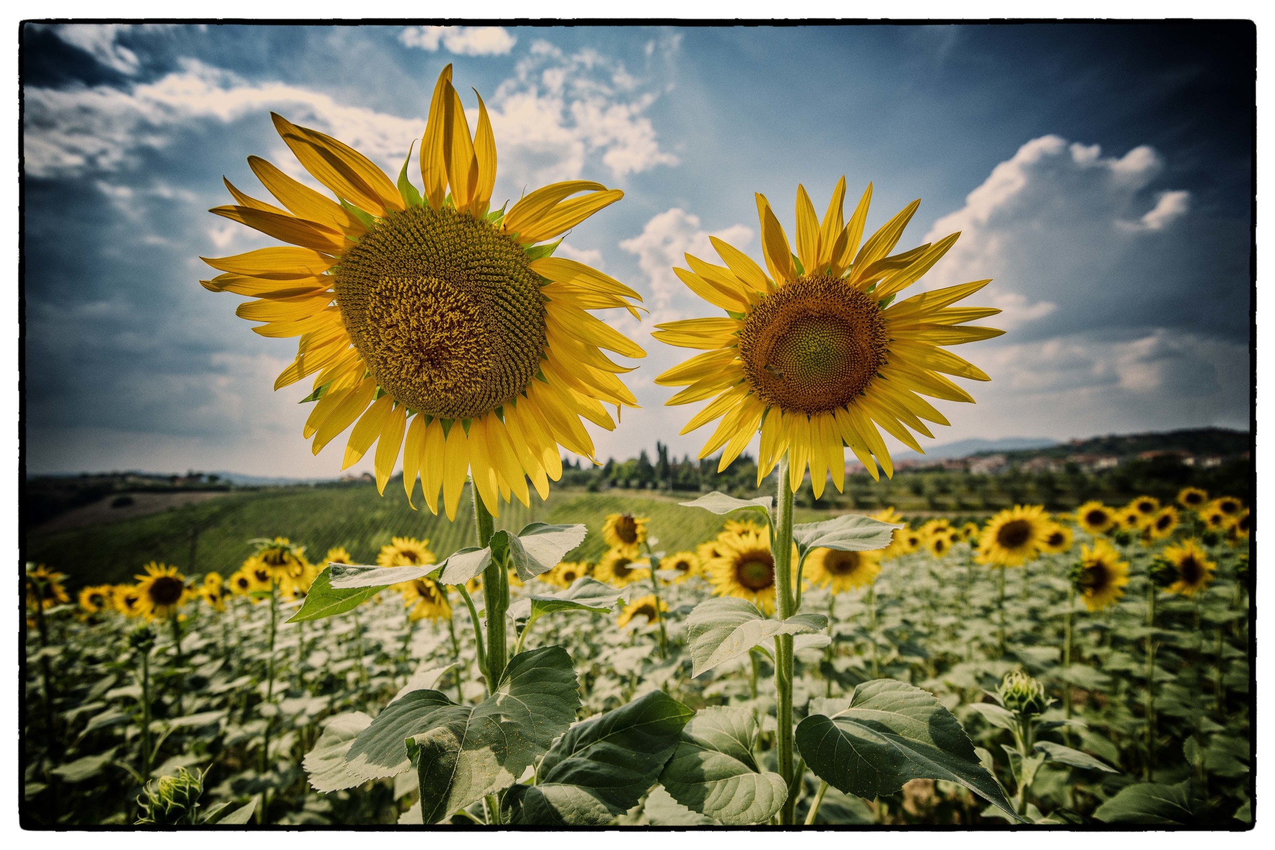"""""""Tuscan Twins"""" from the Scene Gallery (August 2015)"""