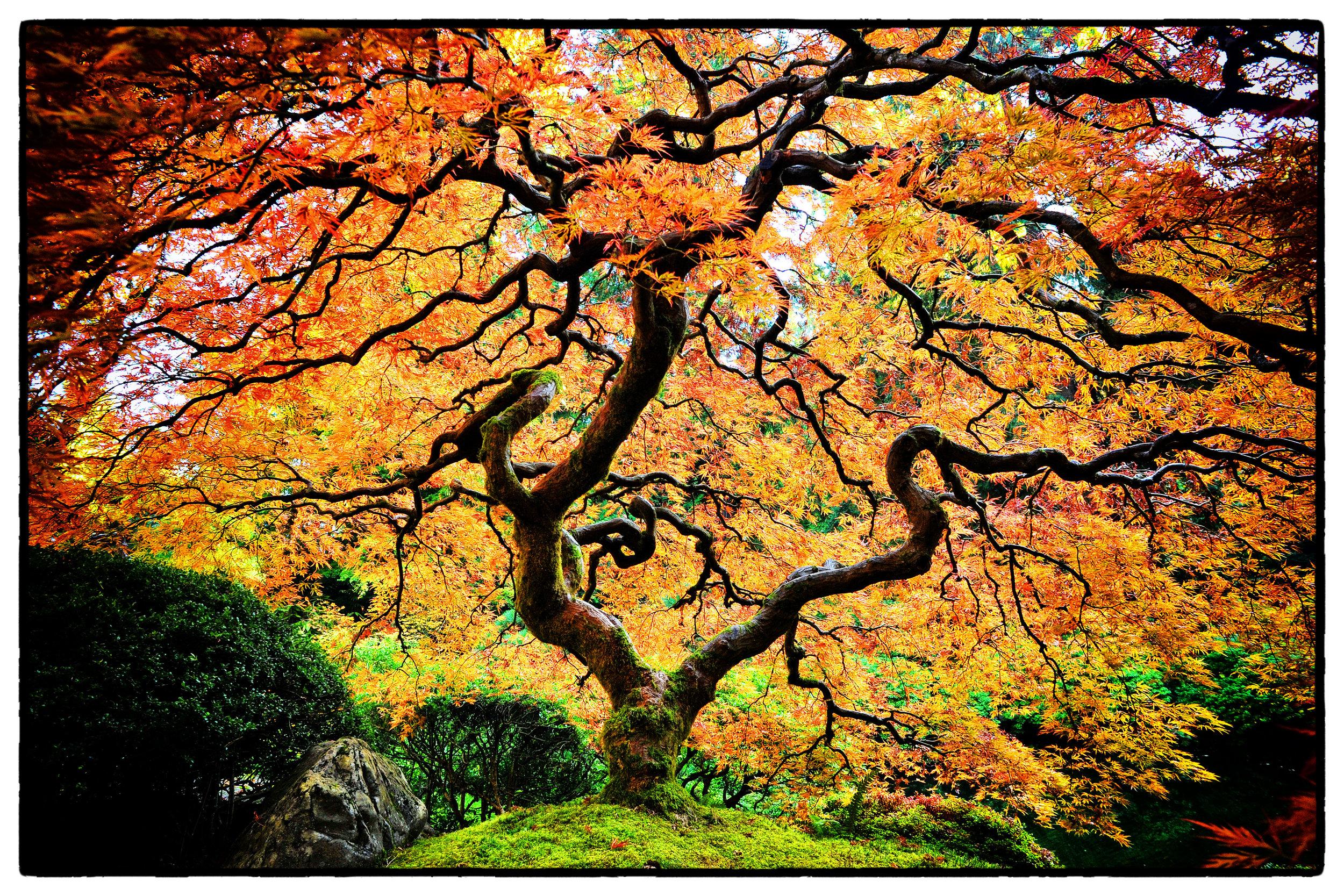 Tree (2013)