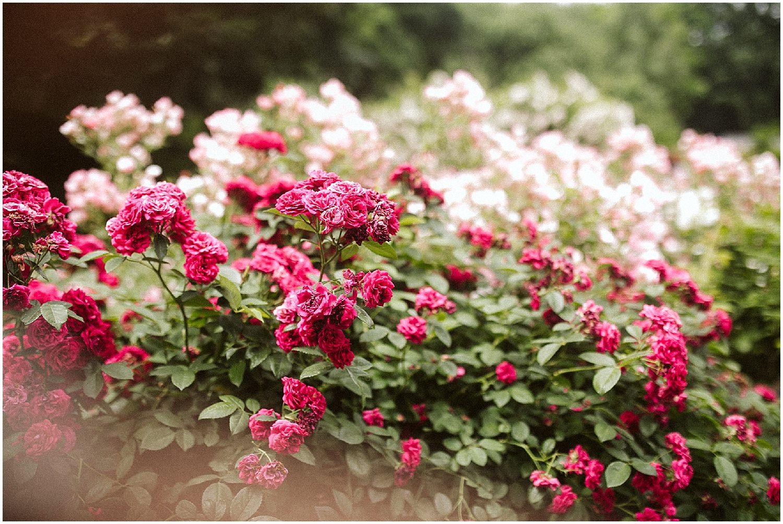 bright pink flowers at brooklyn botanic garden wedding