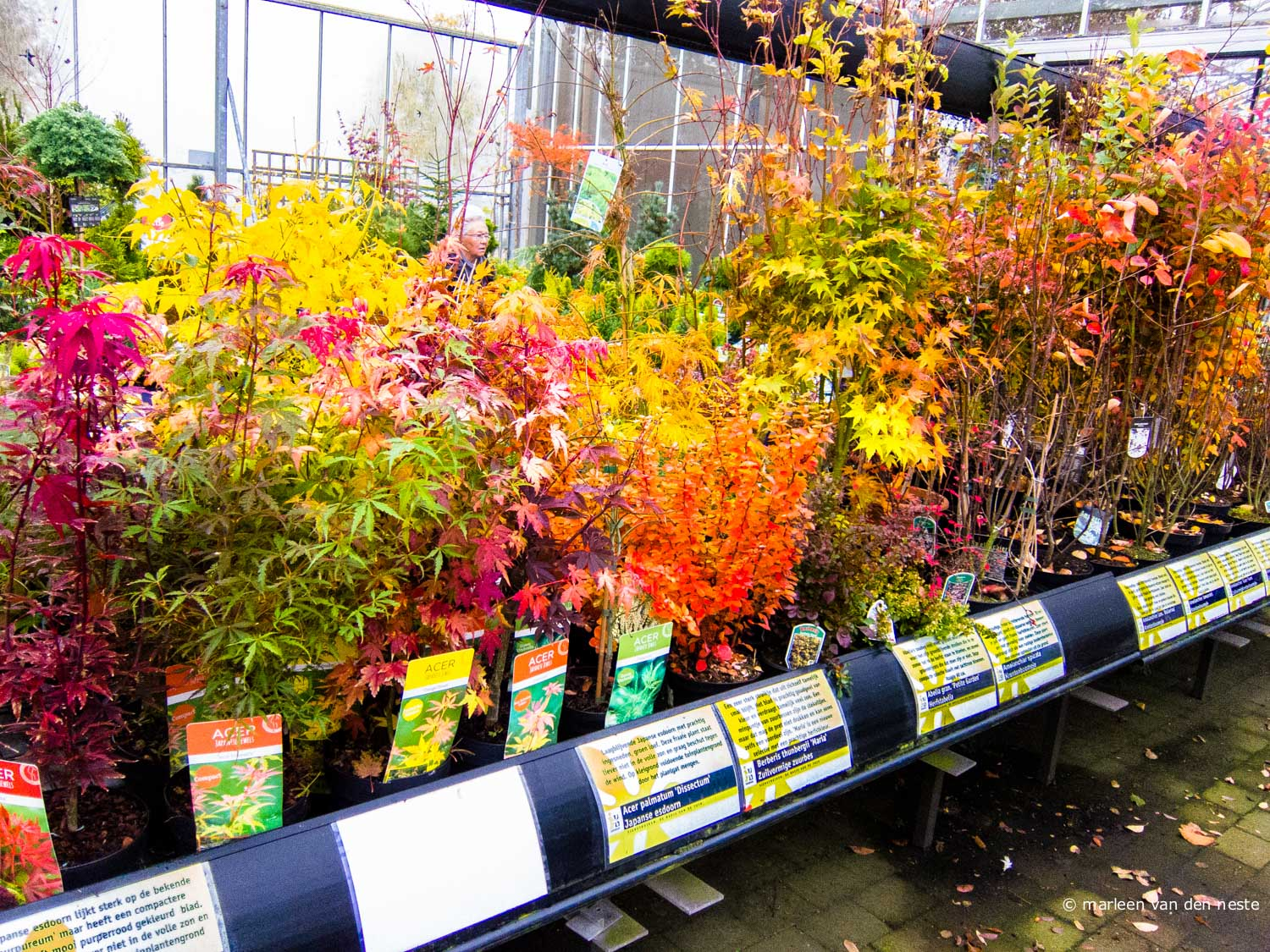 Fall foliage in a garden center in Numansdorp.