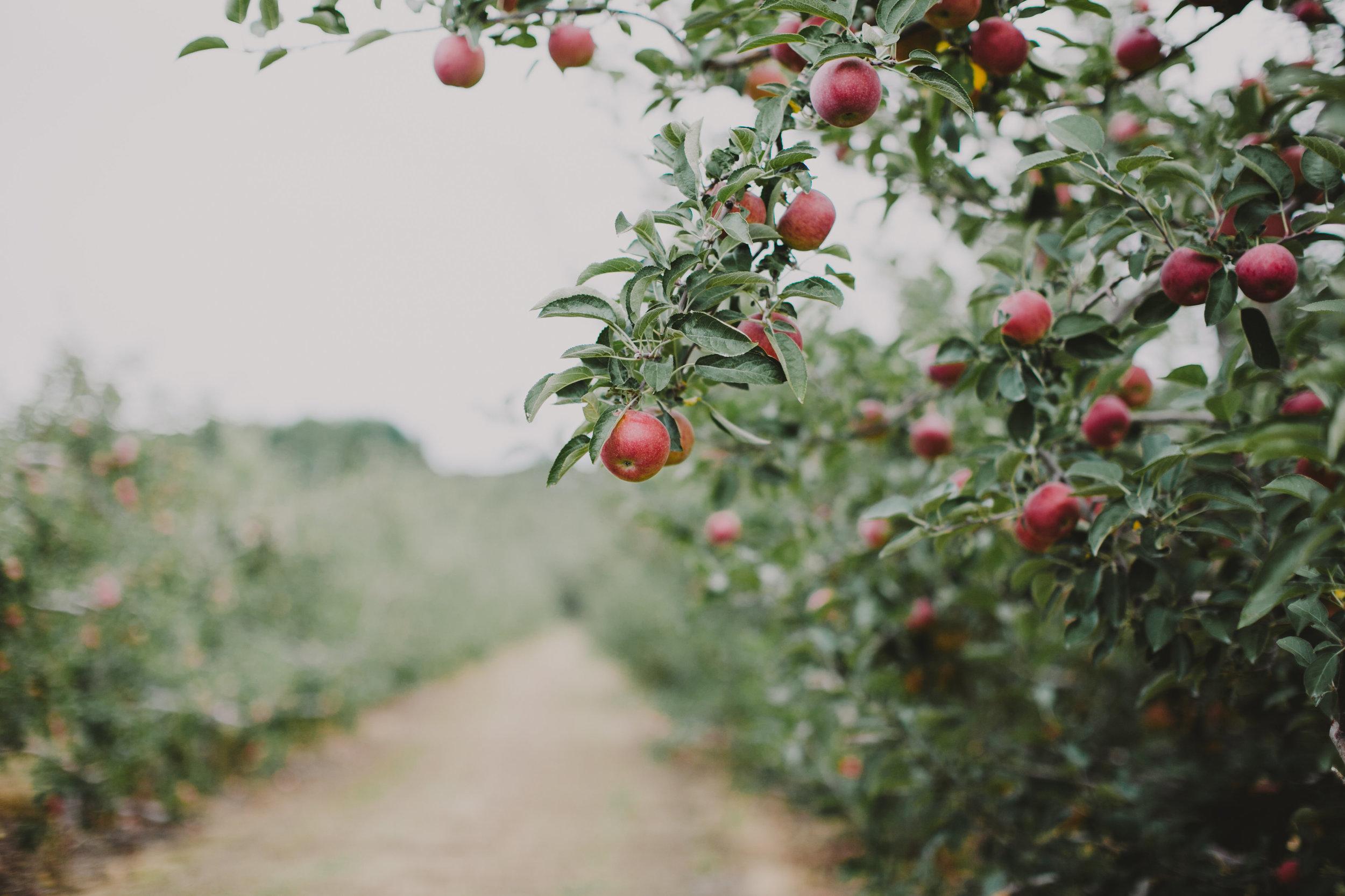 LIBERTY_VIEW_FARM_HIGHLAND_NY_WEDDING_CHELLISE_MICHAEL_PHOTOGRAPHY725.JPG