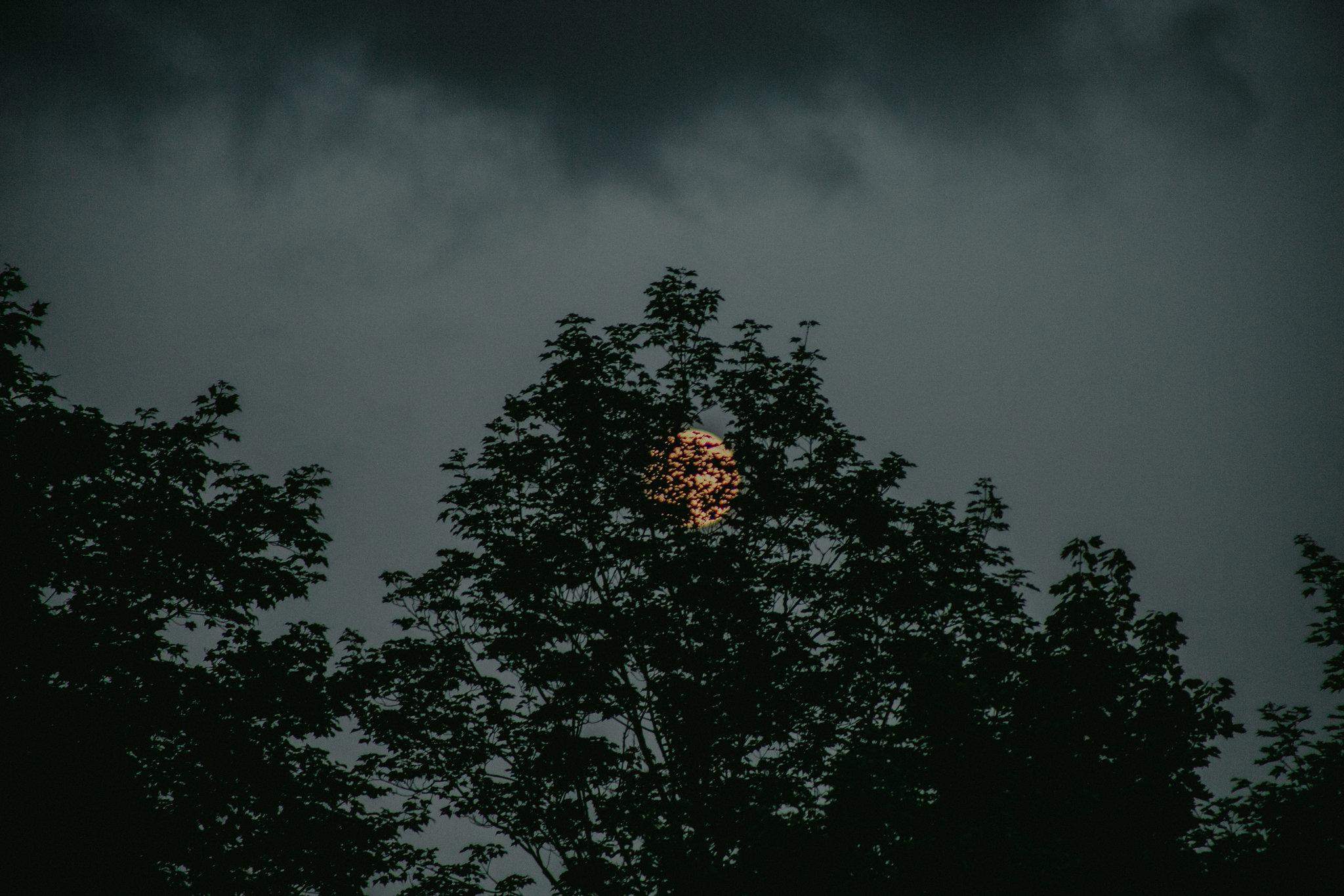 CatskillsWeddingPhotographerChelliseMichaelPhotography-599.jpg