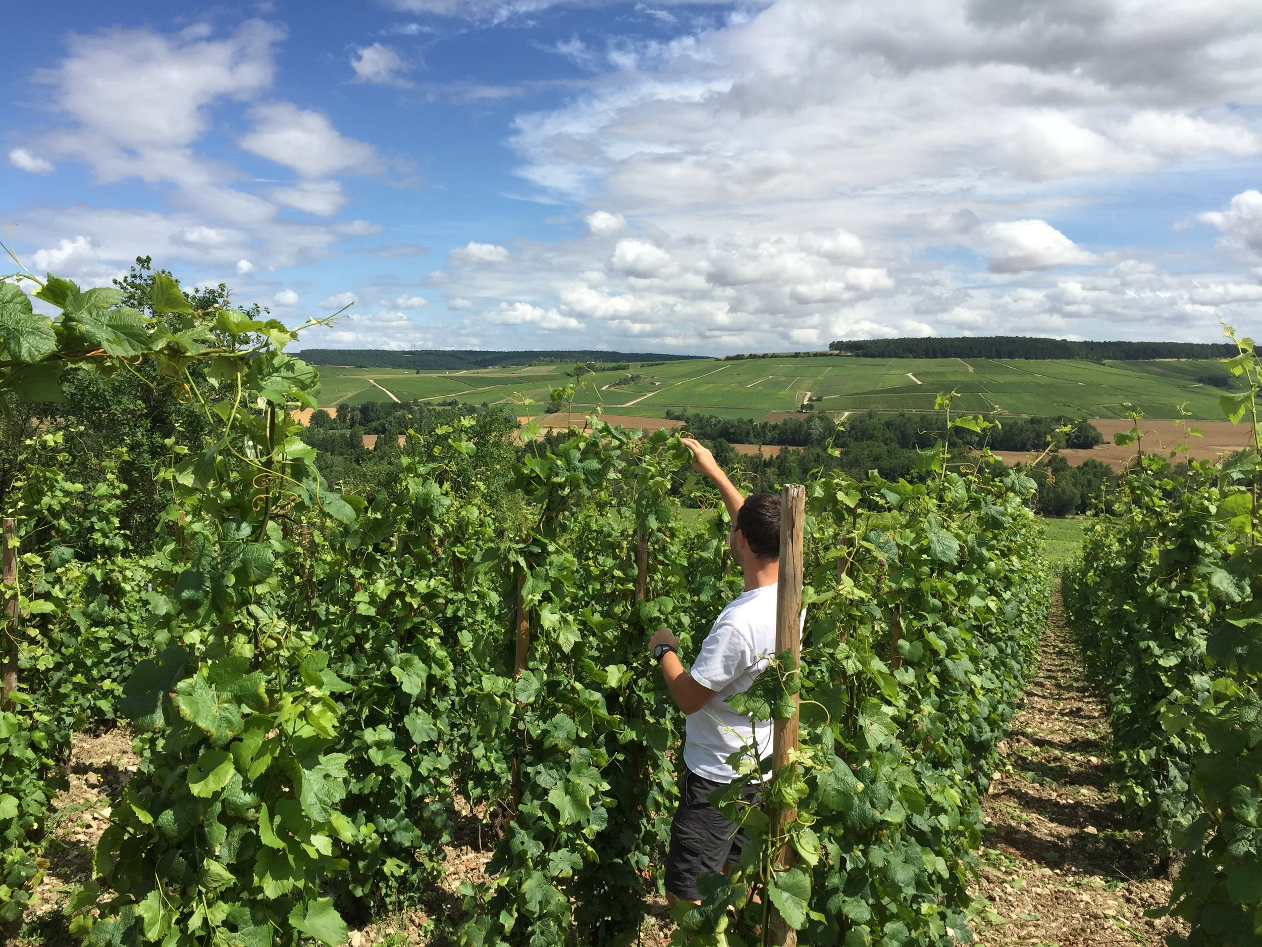 Aurélien Gerbais in his vineyards, Celles-sur-Ource, France