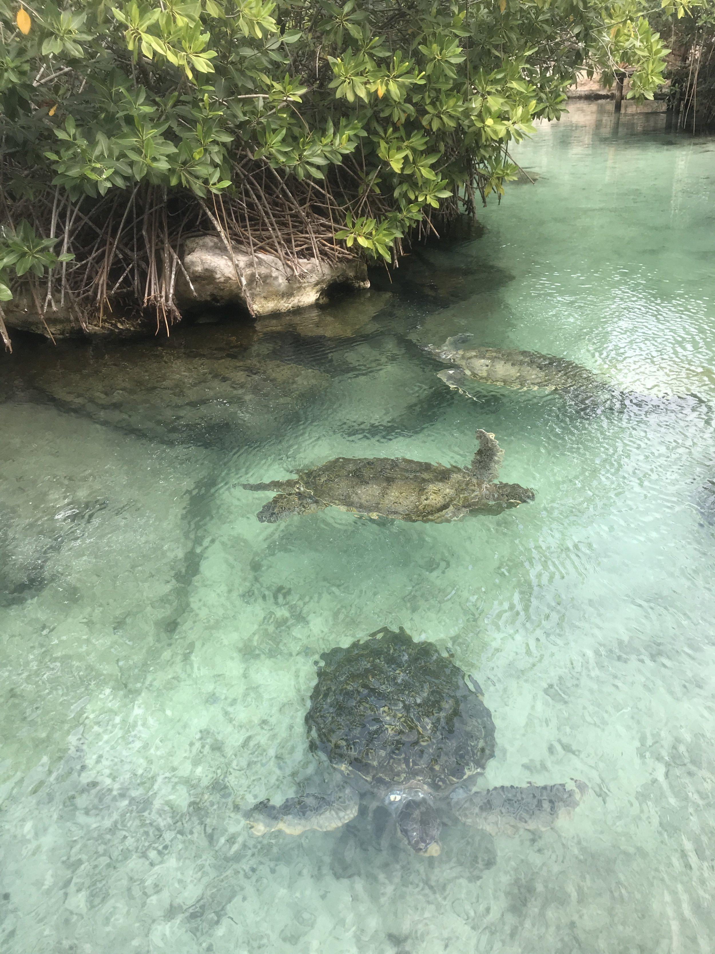 Sea Turtles Xcaret