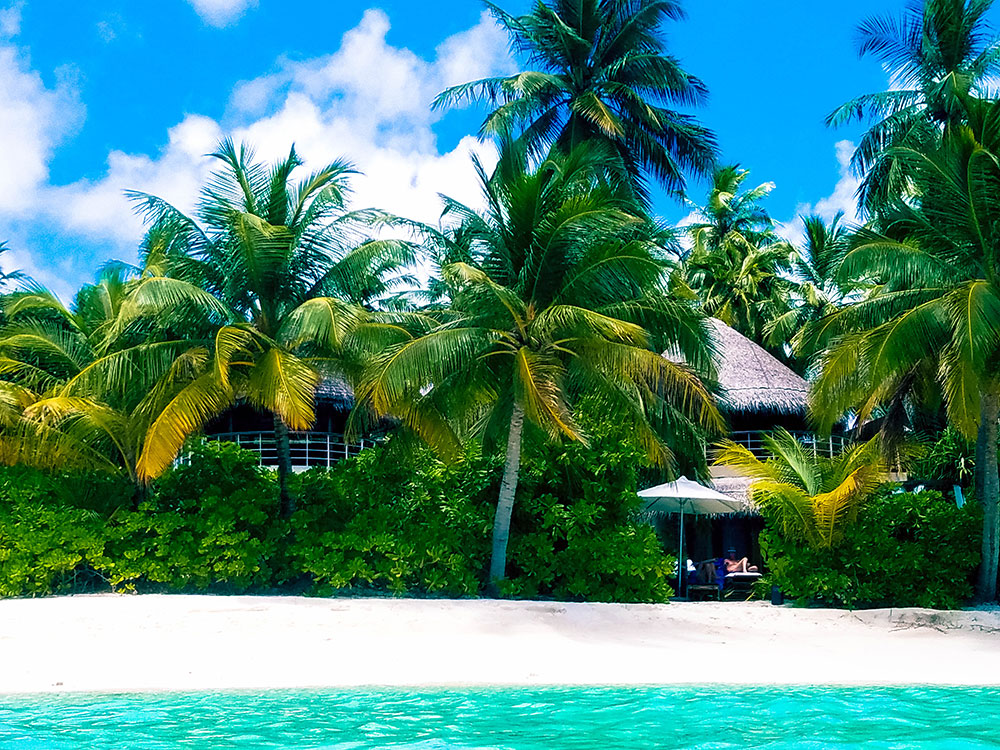 Beach in Maldives with trees.jpg