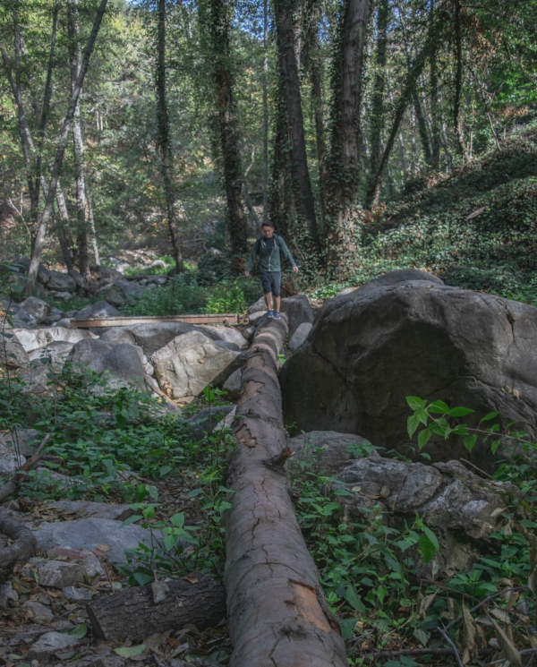 Sturtevant Falls Trail log bridge