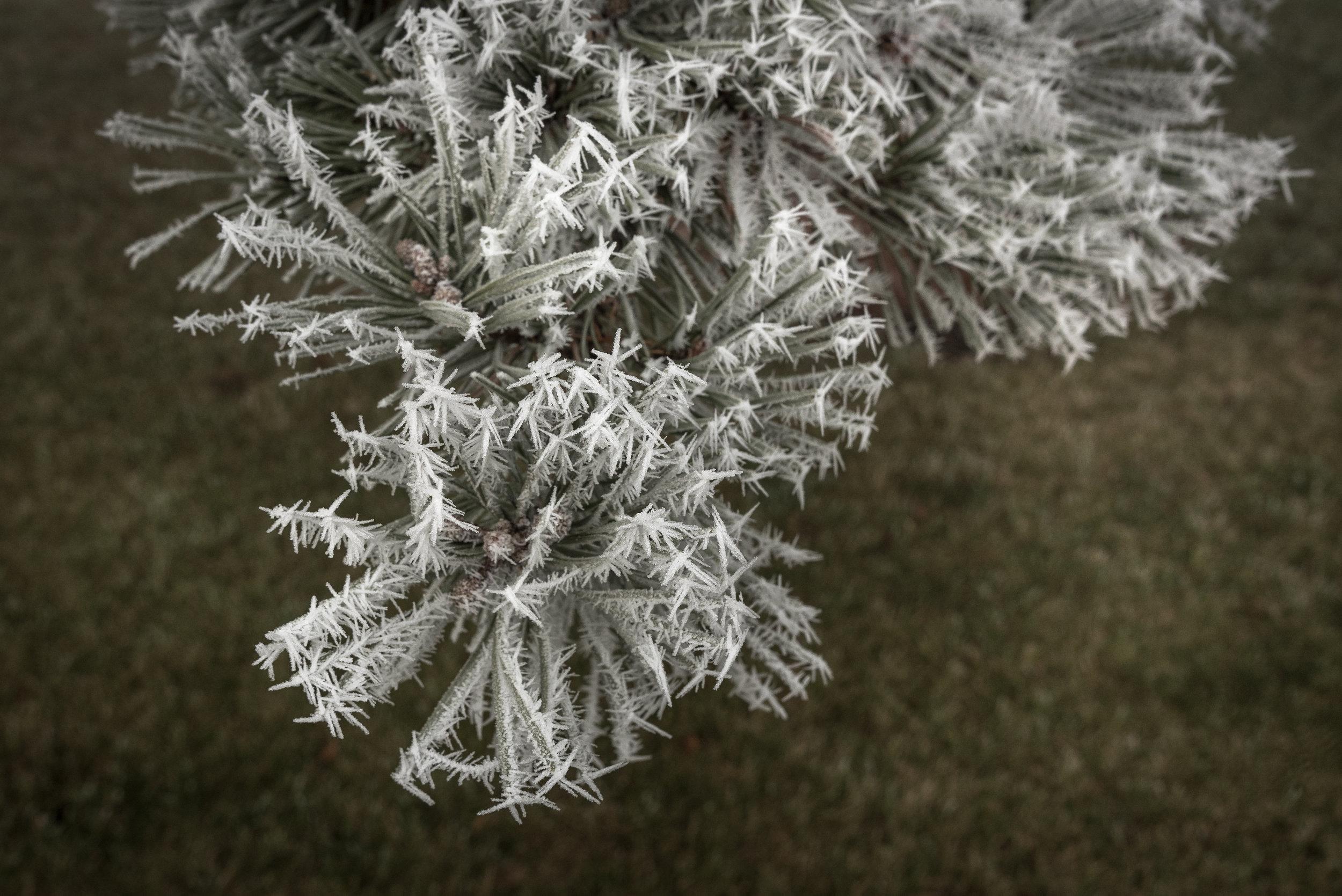 Frost-7509456.jpg