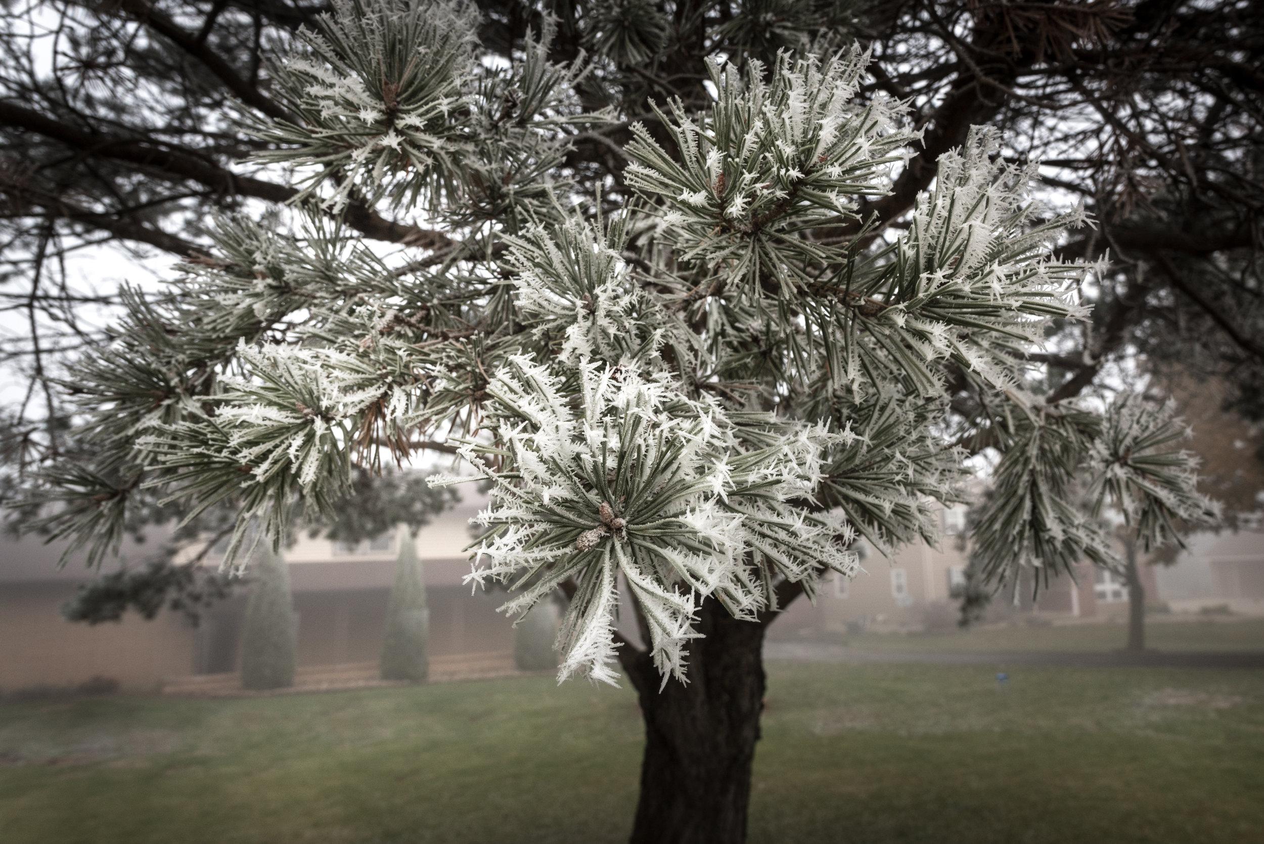 Frost-7509462.jpg
