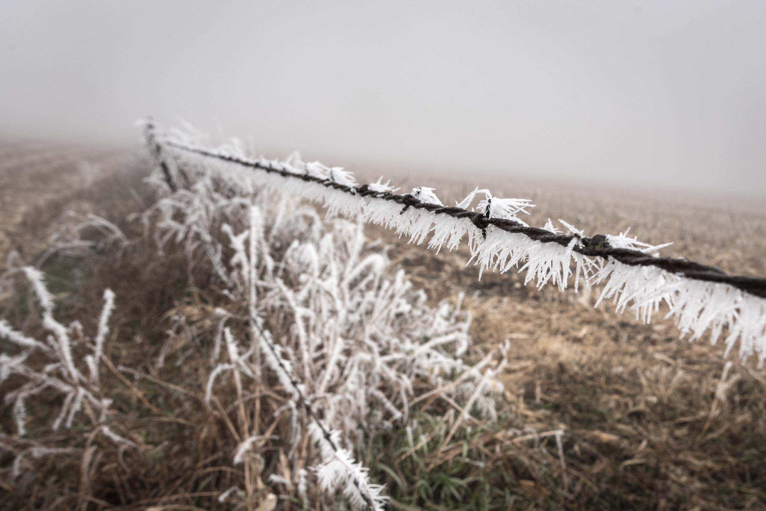 Frost-7509567.jpg