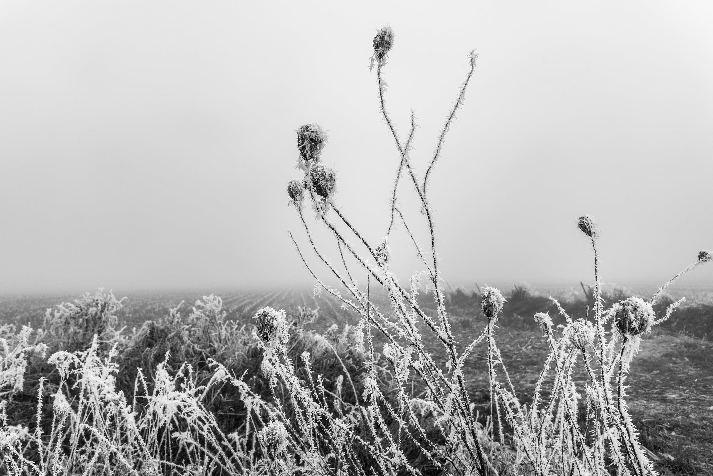 Frost-7509578.jpg