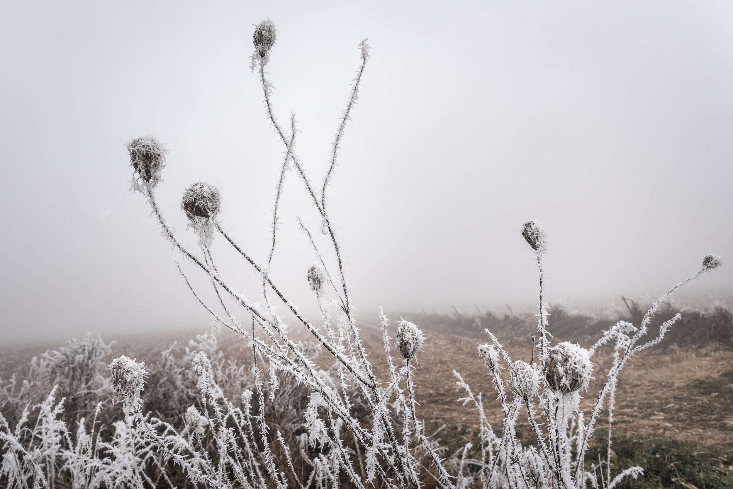 Frost-7509584.jpg