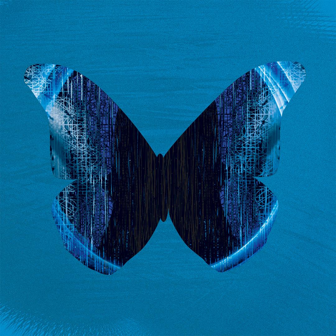 blue_morpho_6.jpg