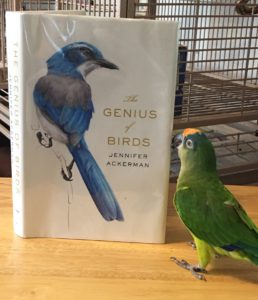 Somebirdy is abeak that HE is not on the cover.