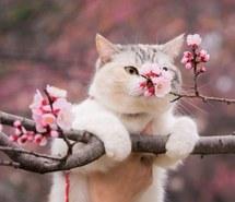 animals-botanical-cat-cherry-blossom-Favim.com-2838999.jpg