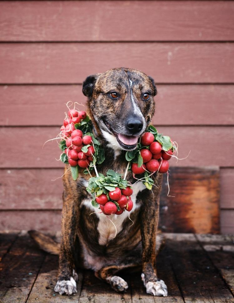 radish dog.jpg