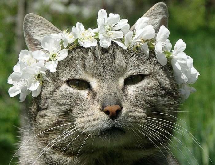 cat flower crown