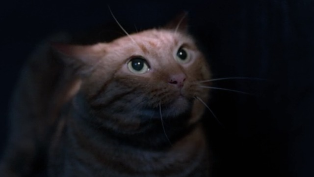 flashlight cat
